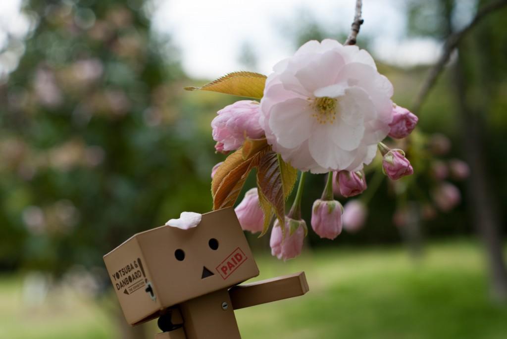 里桜@長居植物園