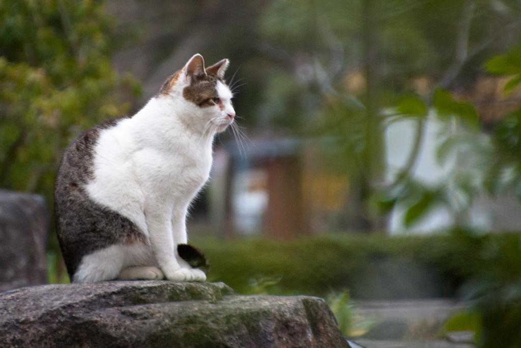 「世界から猫が消えたなら」……どうする?