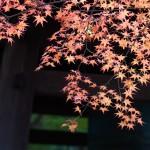 晩秋のがあさんぽ 京都編