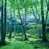 春のがあさんぽ 苔と春の緑に没頭@京都 祇王寺