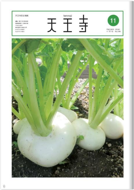 天王寺区広報紙11月号「天王寺蕪」意外なエピソード満載のなにわの伝統野菜
