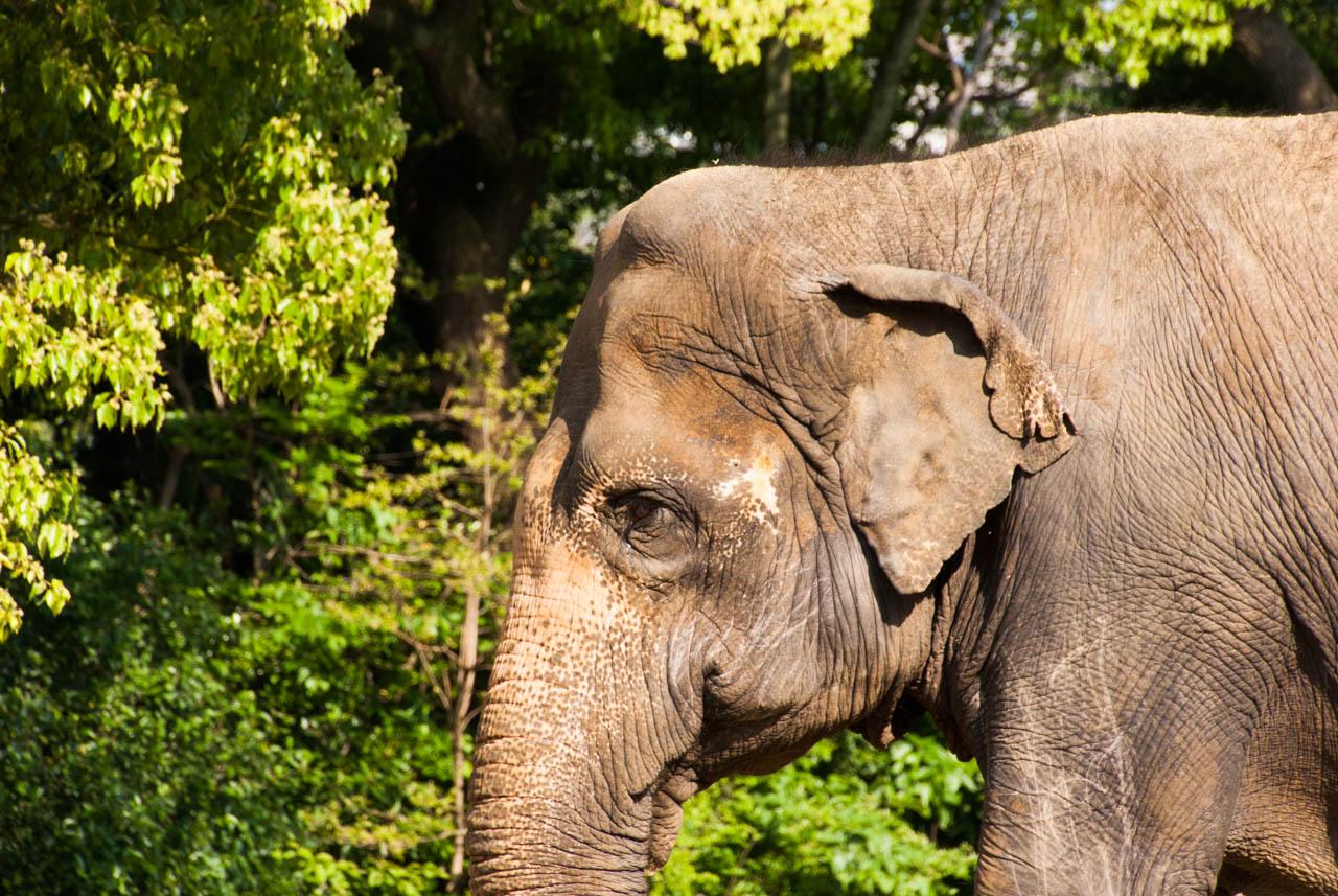 天王寺広報紙5月号「天王寺動物園に行ってみませんか?」
