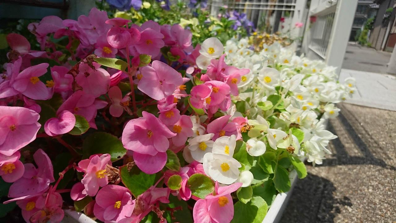 花のゆりかごで育てられる花苗