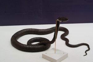 自在置物(蛇)