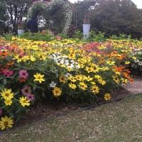 長居植物園(iPhone4S)